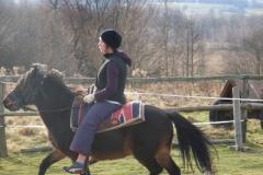 konie3